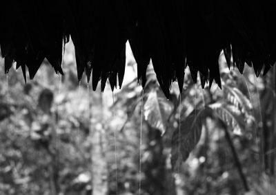 Aurore - Alexandra Castellacci, Forêt amazonienne, Iquitos - Pérou